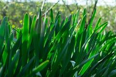 Junges gr?nes Gras Sun-Tag Wecken der Natur lizenzfreie stockbilder
