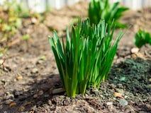 Junges gr?nes Gras Sun-Tag Wecken der Natur stockbild