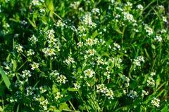 Junges gr?nes Gras Sun-Tag Wecken der Natur stockbilder