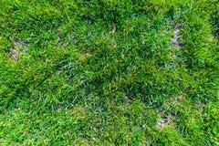 Junges Gras in einer Wiese Stockbild