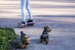 Junges Hippie-Mädchen, das auf hoverboard am sonnigen Park fährt, Lizenzfreies Stockfoto