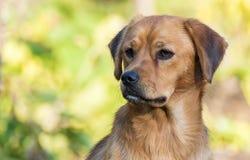 Junges Hundeporträt lizenzfreie stockfotos