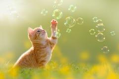 Junges Kätzchen, das mit Seifenblasen, Blasen auf Wiese spielt Lizenzfreies Stockbild