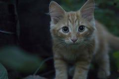 Junges Kätzchen in der Grasaußenaufnahme am sonnigen Tag Lizenzfreies Stockbild