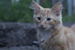 Junges Kätzchen in der Grasaußenaufnahme am sonnigen Tag Stockfoto
