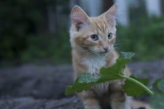 Junges Kätzchen in der Grasaußenaufnahme am sonnigen Tag Stockfotos