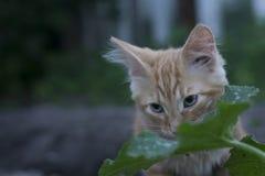 Junges Kätzchen in der Grasaußenaufnahme am sonnigen Tag Stockbild