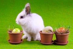 Junges Küken und Kaninchen Stockfoto