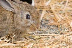 Junges Kaninchen Lizenzfreie Stockfotos