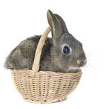 Junges Kaninchen stockfotos