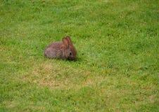 Junges Kaninchen Lizenzfreie Stockfotografie