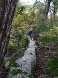 Junges Mädchen auf gefallenem Baum Stockfoto