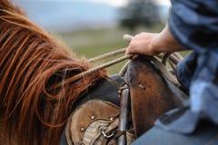 Junges Mädchen auf Pferd Stockfotografie