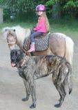 Junges Mädchen auf Pony mit riesigem Mastiffhund Lizenzfreie Stockbilder