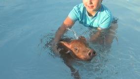 Junges Mädchen in Badeanzug schwimmt im klaren, blauen Wasser des Pools mit rotem Schwein von Duroczucht 2019-jährig vom gelben S stock footage