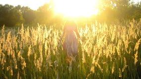 Junges Mädchen, das auf dem Gebiet mit einem trockenen flaumigen Gras geht stock footage