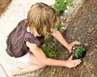 Junges Mädchen, das Blumen pflanzt Stockfotos
