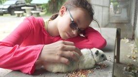 Junges Mädchen, das Gesamtlängenvideo des Eichhörnchens auf Lager streicht stock video