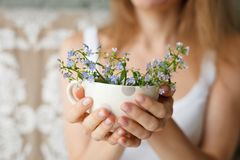 Junges Mädchen in einem weißen Behälter, der eine punktierte Schale mit Vergissmeinnicht hält Blumen in einem Becher Hände mit Bl lizenzfreie stockfotografie