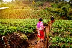 Junges Mädchen im Erdbeergarten Stockfotografie