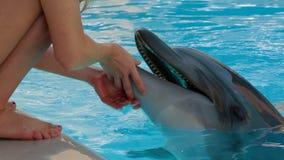 Junges Mädchen-Liebkosungs-Delphin stock footage