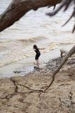 Junges Mädchen am Strand, der durch Treibholz gestaltet wird, verzweigt sich stockbilder