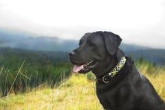 Junges männliches schwarzes Labrador retriever auf einem Hintergrund des Berges Lizenzfreie Stockfotografie