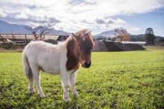 Junges nettes Pferd im Bauernhof im Morgensonnenaufgang mit BAC des grünen Grases lizenzfreie stockfotos