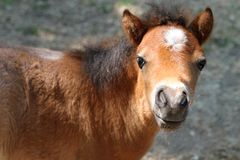 Junges Pony Stockfotos