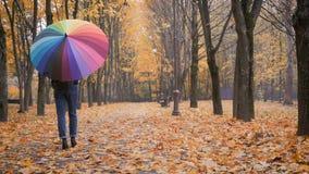 Junges schönes Mädchen, das allein unter Regenschirm im Herbstpark geht stock video footage