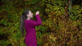 Junges schönes Mädchen geht in den Herbstwald, den sie glücklich ist Das Mädchen betrachtet mehrfarbige Blätter stock footage