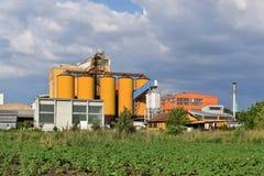 Junges Sonnenblumenackerland und -silos im Hintergrund Lizenzfreie Stockfotografie