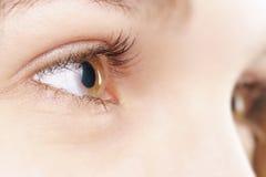 Junges weibliches Haselnussauge mit Kontaktlinse Lizenzfreie Stockfotos