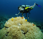 Junges weibliches Unterwasseratemgerättaucherportrait Lizenzfreie Stockfotografie