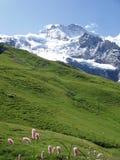 jungfrau瑞士 免版税图库摄影