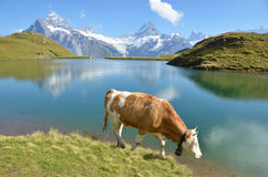 Jungfrau region, Switzerland Royalty Free Stock Image