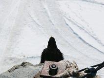 Jungfrau, Zwitserland Een alpiene chough stock afbeelding