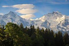Jungfraujoch. View of Jungfraujoch with tree foreground ,Switzerland Stock Image