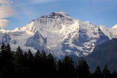Jungfraujoch. View of Jungfraujoch with tree foreground ,Switzerland Stock Photo