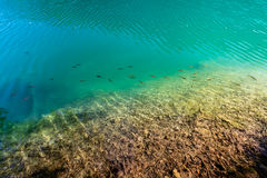 Jungfrulig natur av Plitvice sjönationalparken, Kroatien Arkivbild