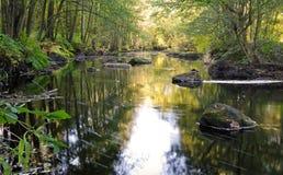 jungfrulig skogflodsvensk royaltyfria foton