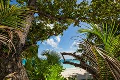 Jungle à la plage Photo libre de droits