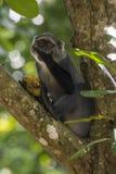 Jungle à Zanzibar photographie stock