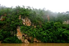 Jungle 1. Jungle scene at the river Kwai valley in central Thailand Royalty Free Stock Image