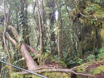 jungle photo stock