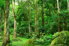 Jungle. With many green trees Stock Photos