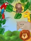 Jungle Photos libres de droits