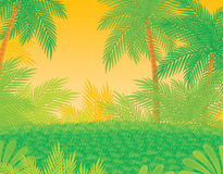 Jungle. An equatorial forest area with palm trees Stock Images