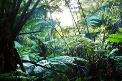 Jungle Royalty Free Stock Photography