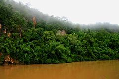 Jungle 2. Jungle scene at the river Kwai valley in central Thailand Royalty Free Stock Photo